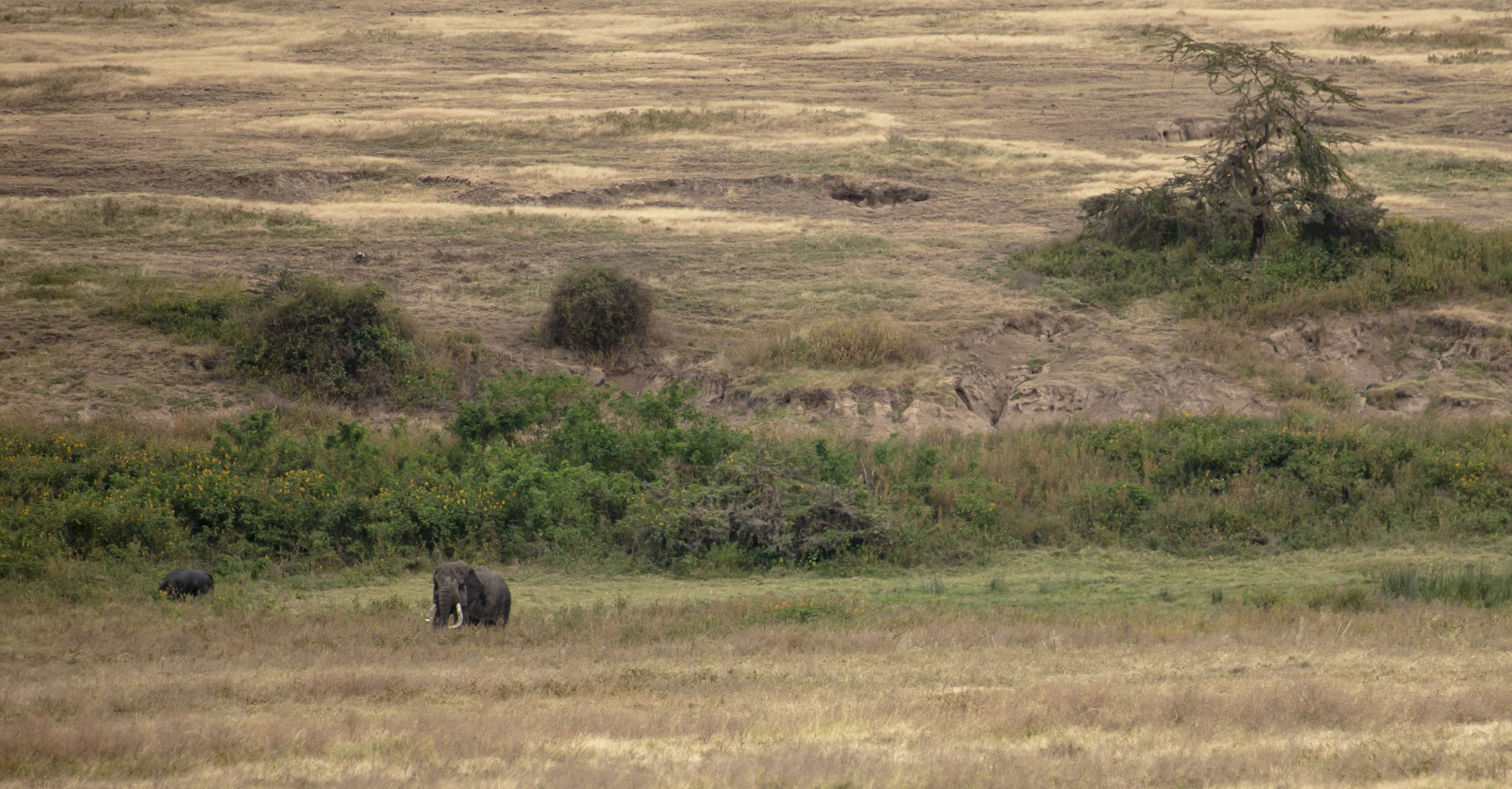 African Adventure - 31 July '18 - Ngorongoro (Crater) Conservation Area to Meserani, Tanzania - 049.JPG