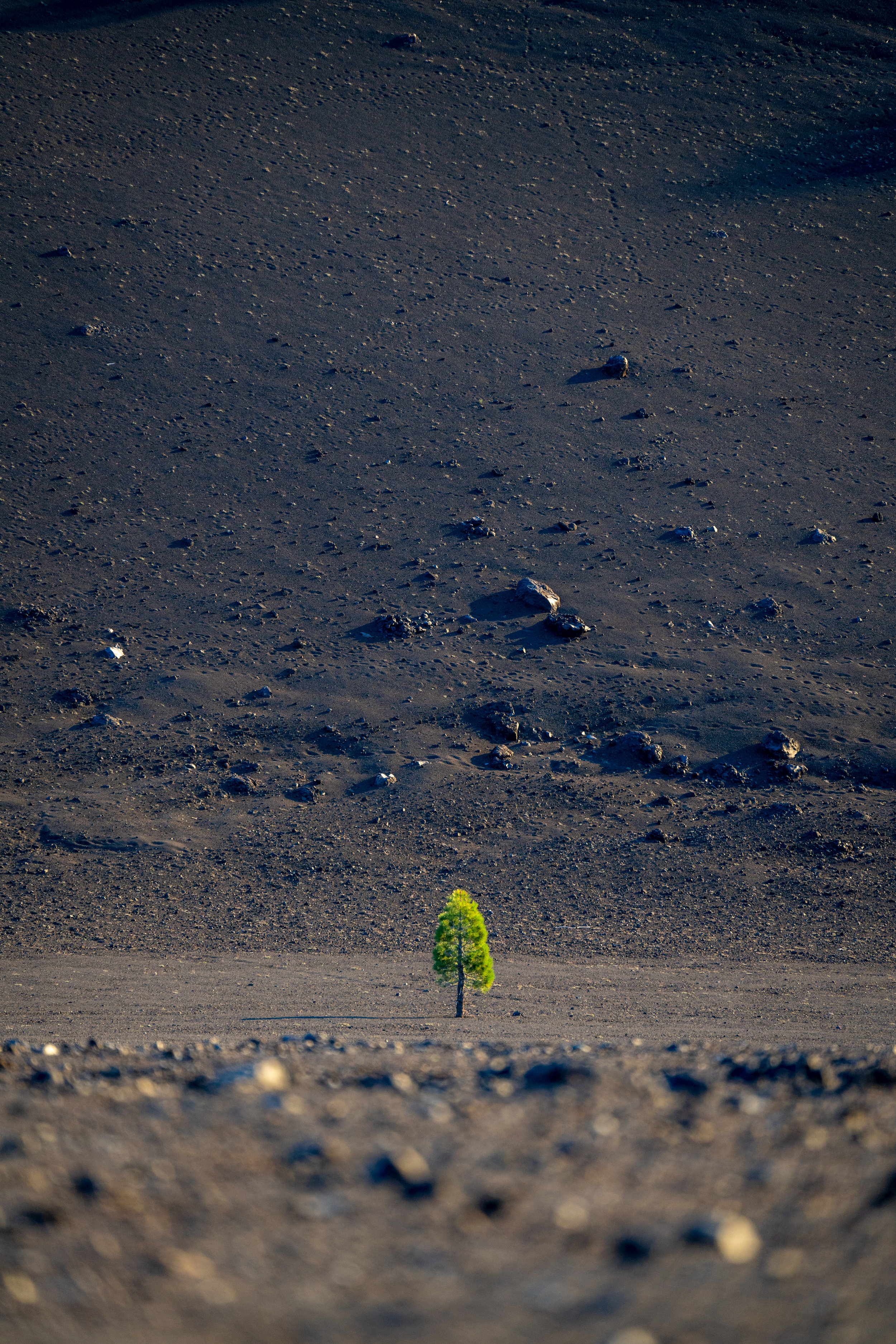 Shot at 300mm from the Cinder Cone summit