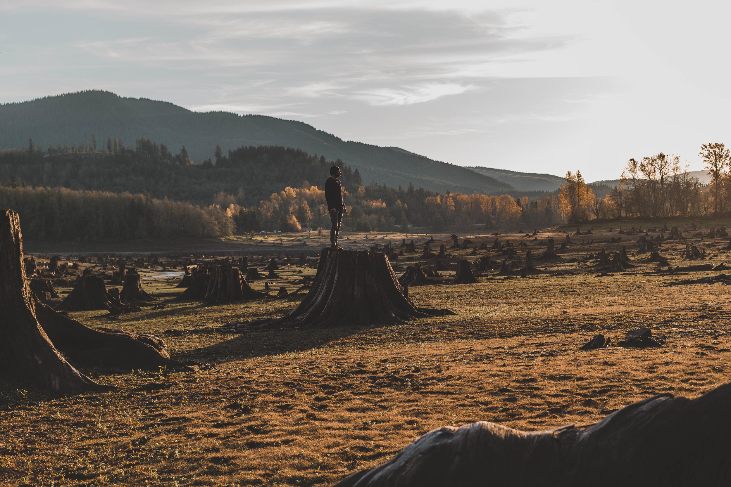 A man stands amidst an empty field with felled trees. Credit: Dave Herring/Unsplash