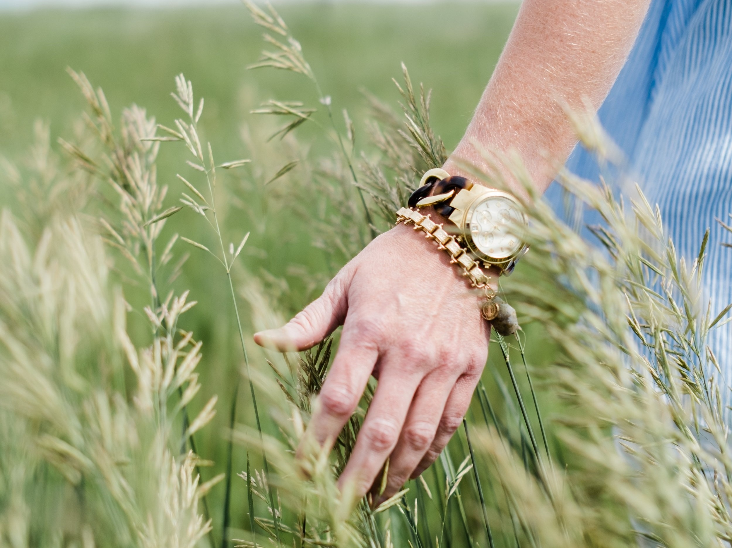 Female hand  and arm with gold watch and bracelet gliding across tall grass