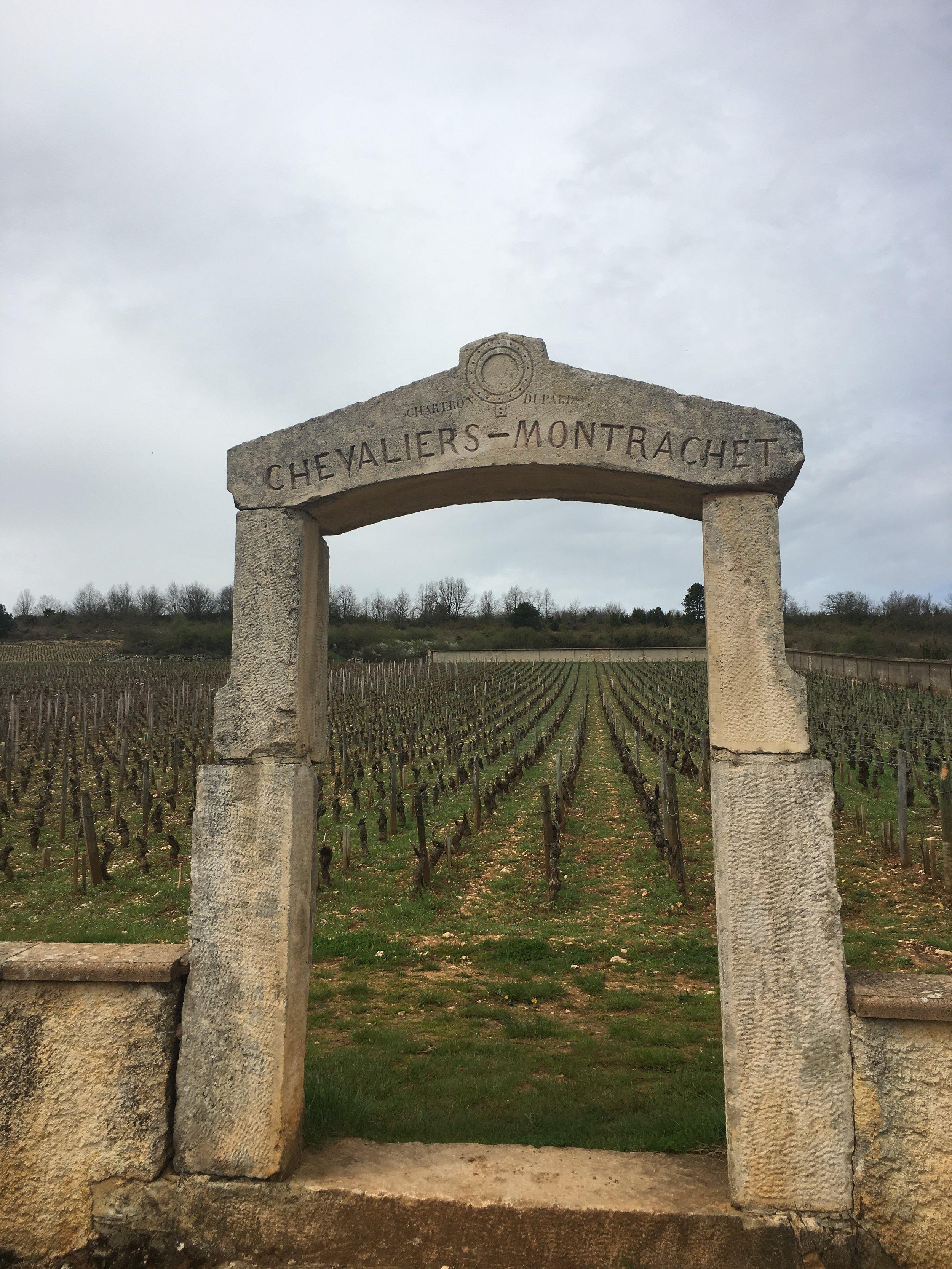 The legendary Chevalier-Montrachet vineyard