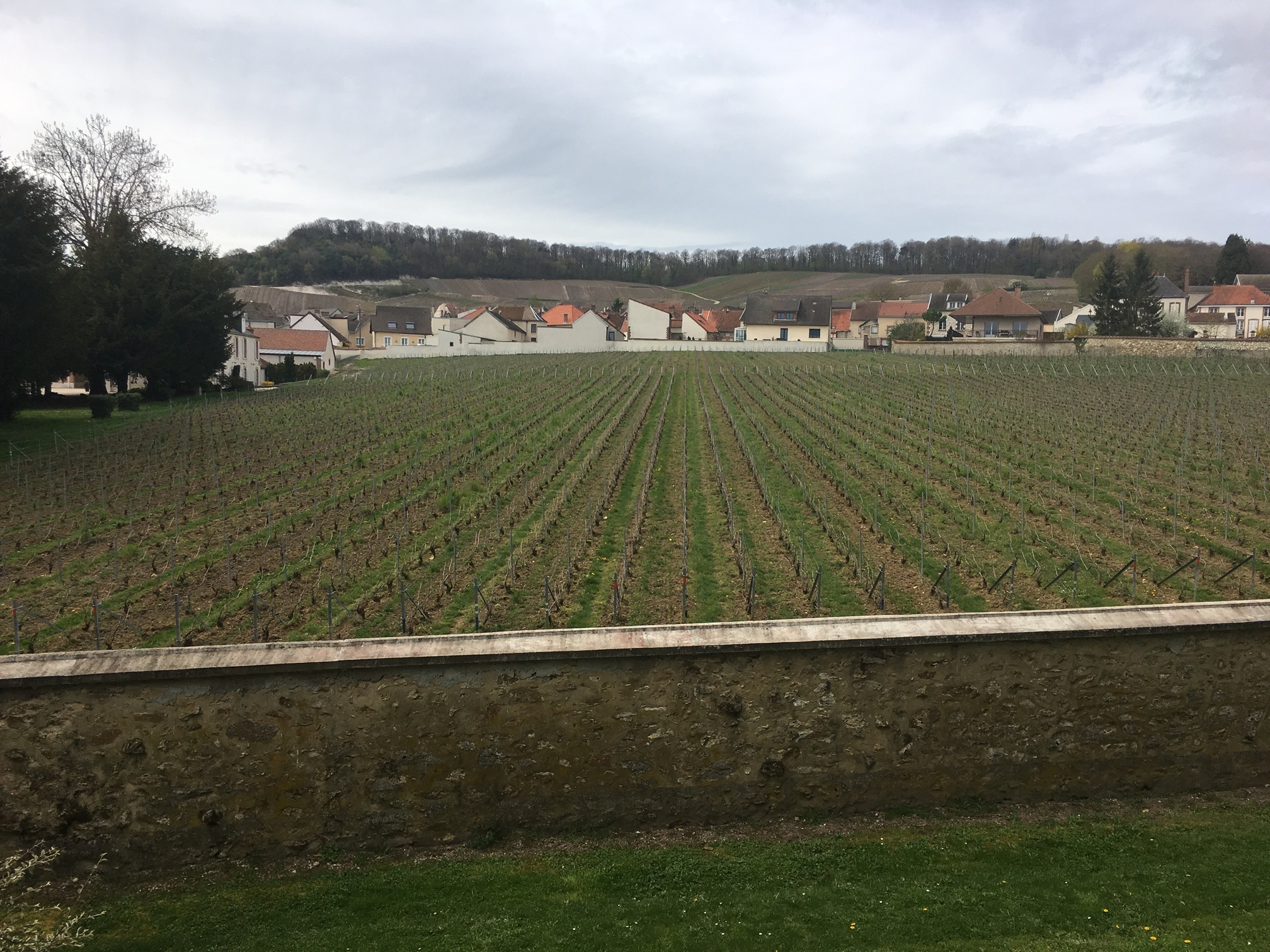 the famous Clos de Mesnil, owned by Krug
