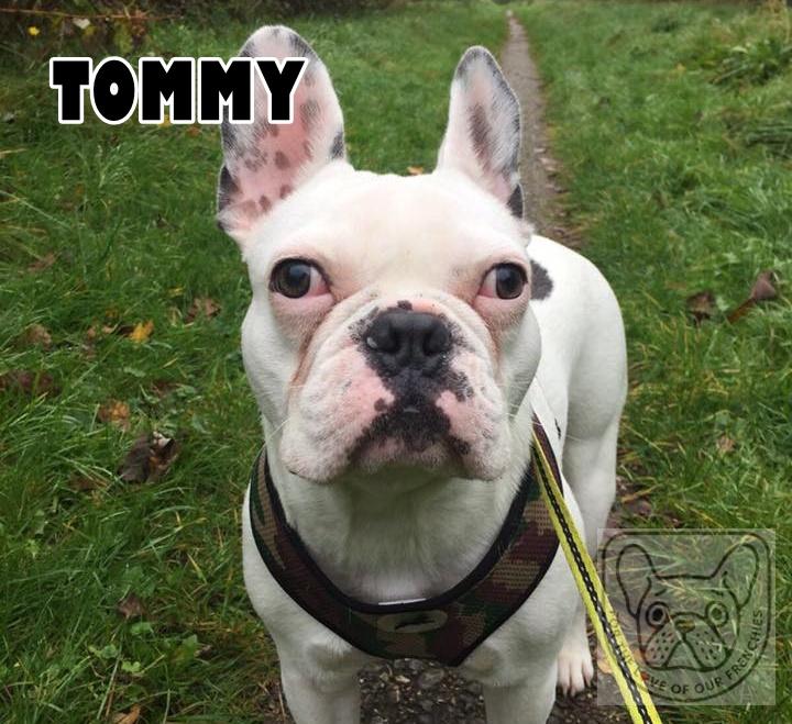 TommyG.jpg