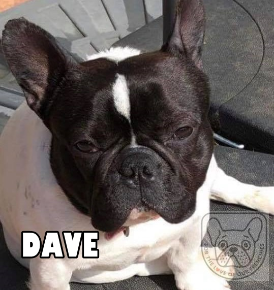 Dave2G.jpg