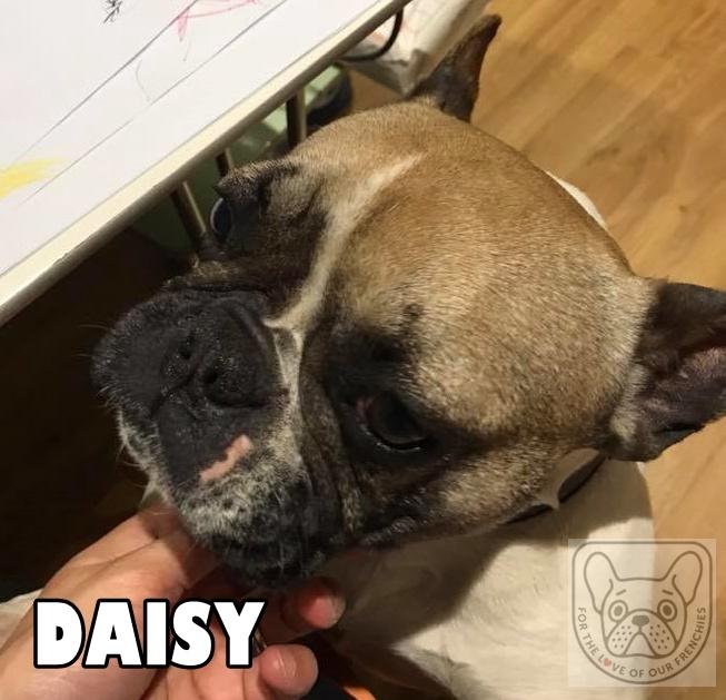 DaisyG.jpg