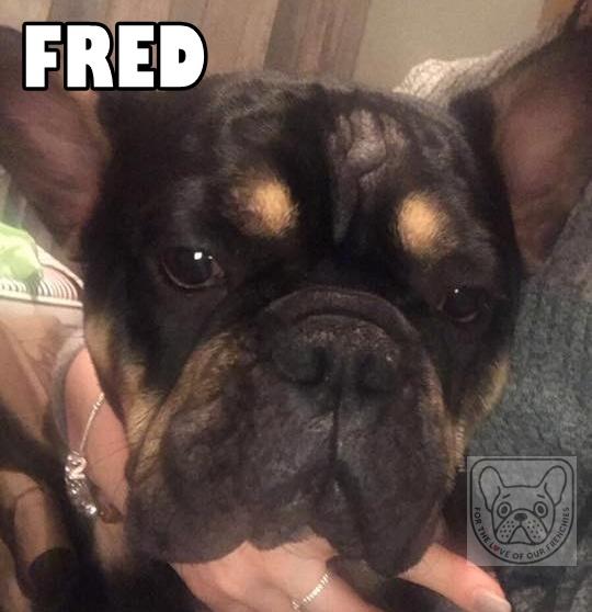 FredG.jpg