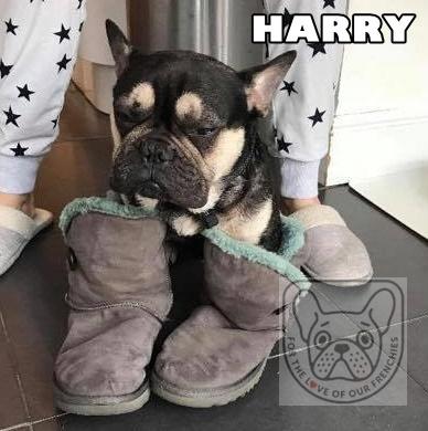HarrybootsG.jpg
