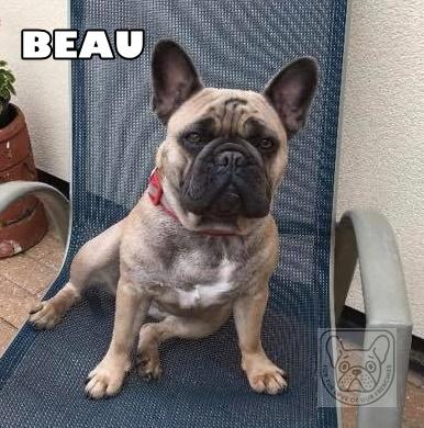 BeauG.jpg