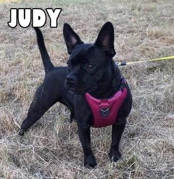 JudyG.jpg