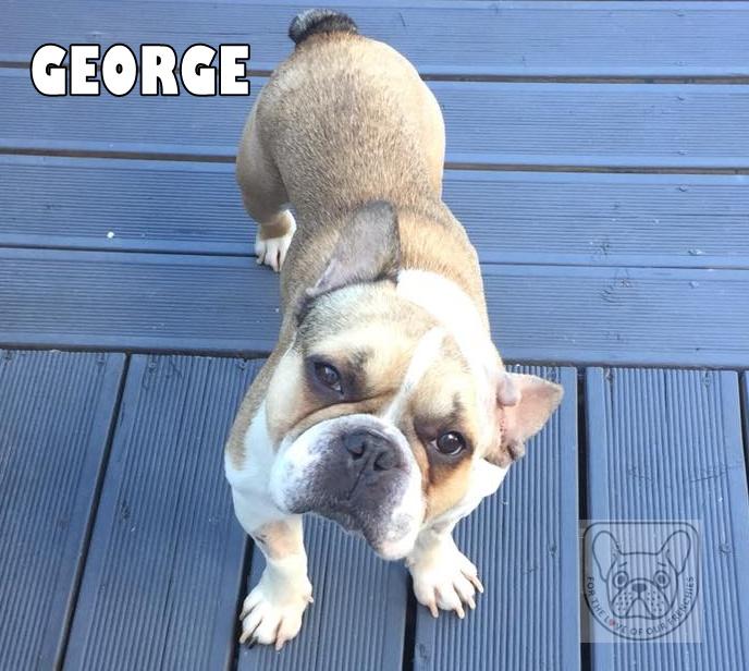 GeorgeMon06G.jpg