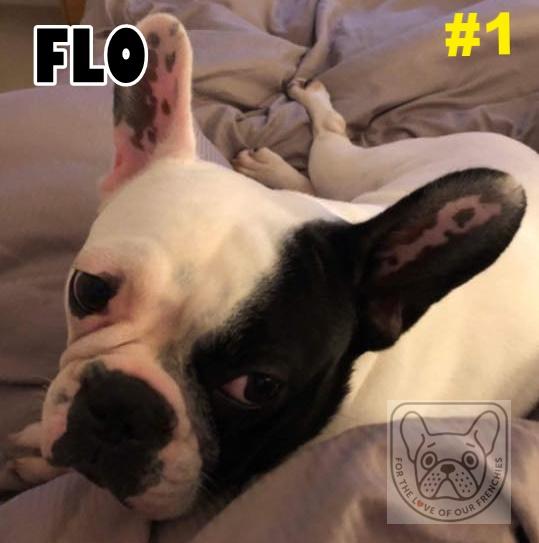 FloG.jpg
