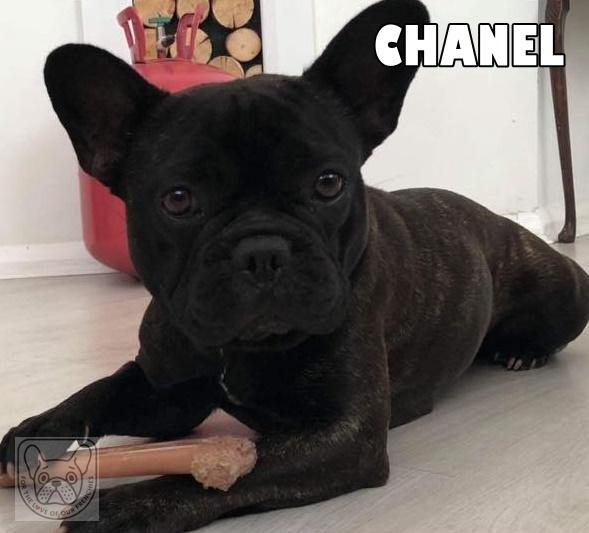 ChanelsundayG.jpg