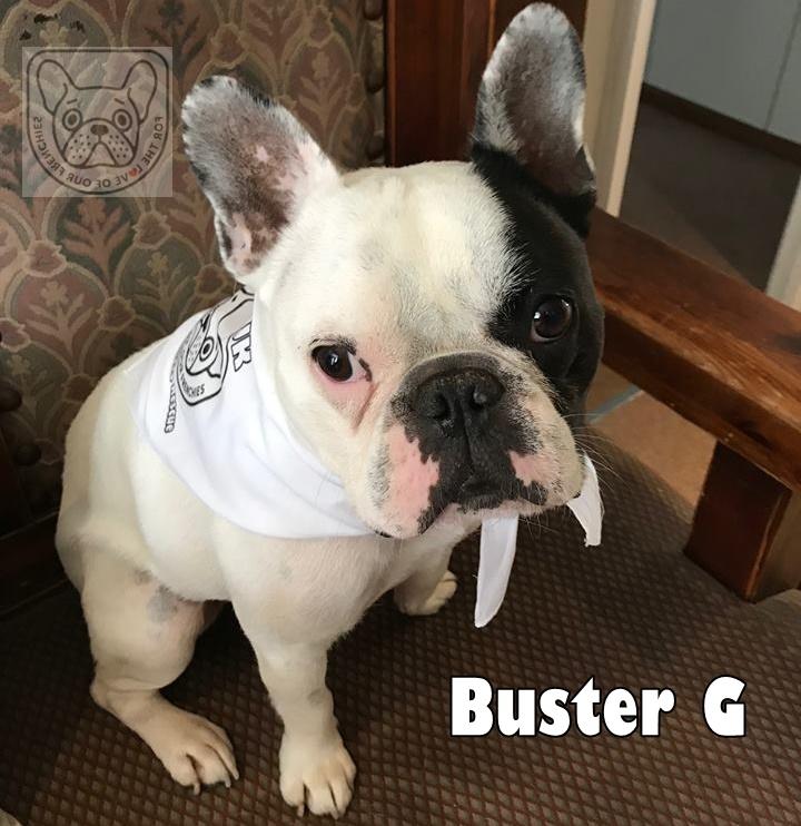 BustergBan2.jpg