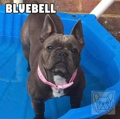 BluebellSunH.jpg