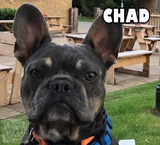 ChadG.jpg