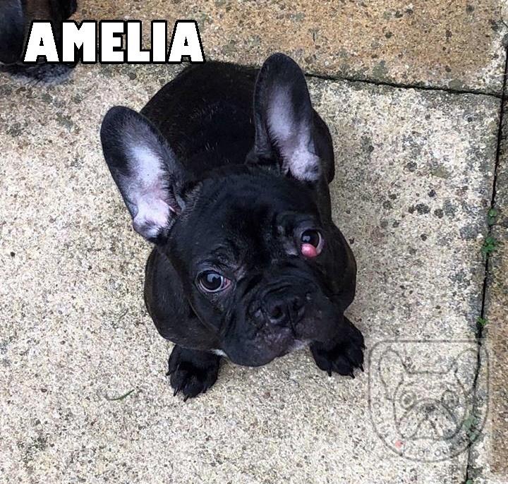 AmeliaG.jpg