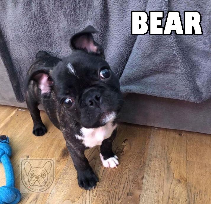 BearM24G.jpg