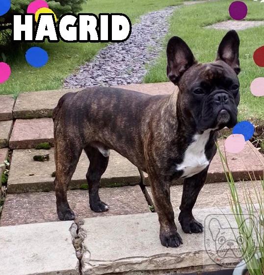 HagridG.jpg