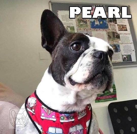 PearlMonG.jpg