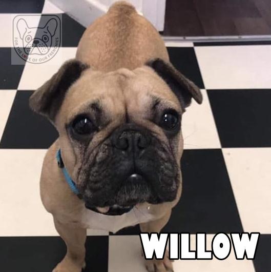 WillowG.jpg