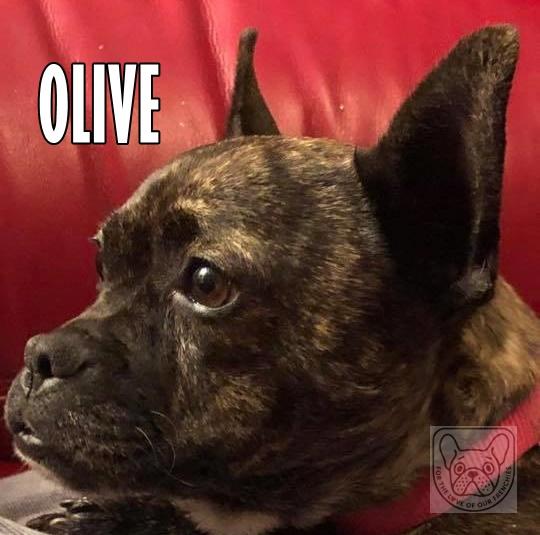 OliveG.jpg