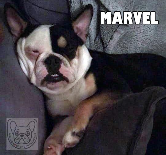 MarvelG.jpg