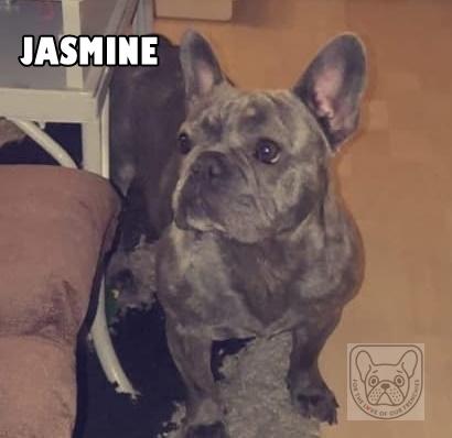 JasmineTuesG.jpg