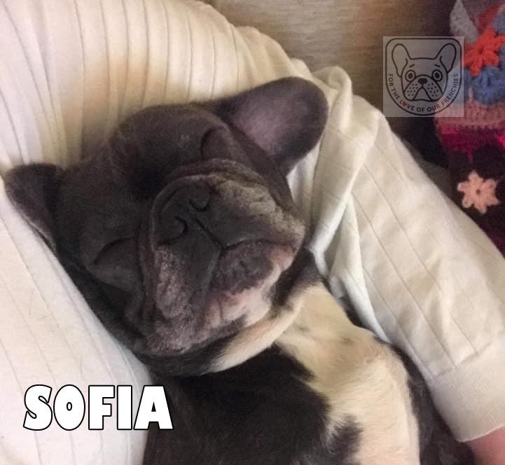 SofiaWedsG.jpg