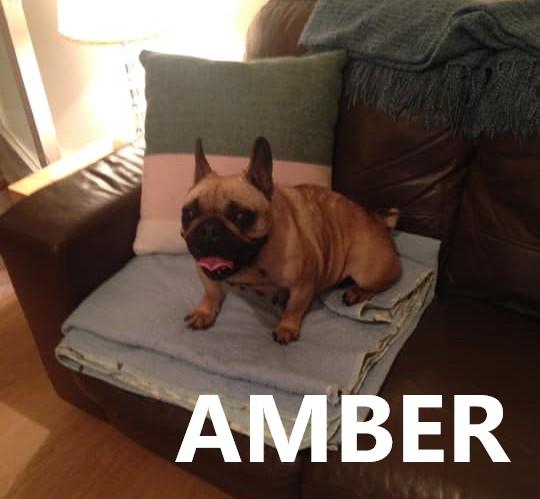 AMBER 2.jpg
