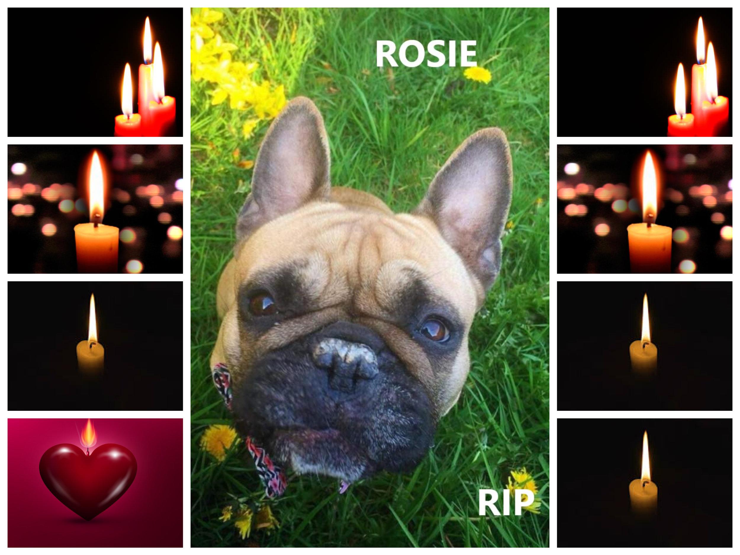 ROSIE RIP.jpg