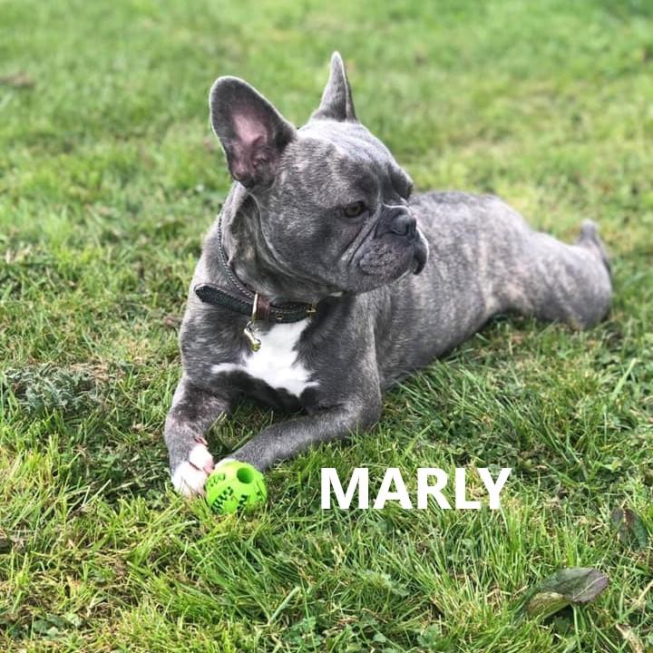 MARLY 1.jpg