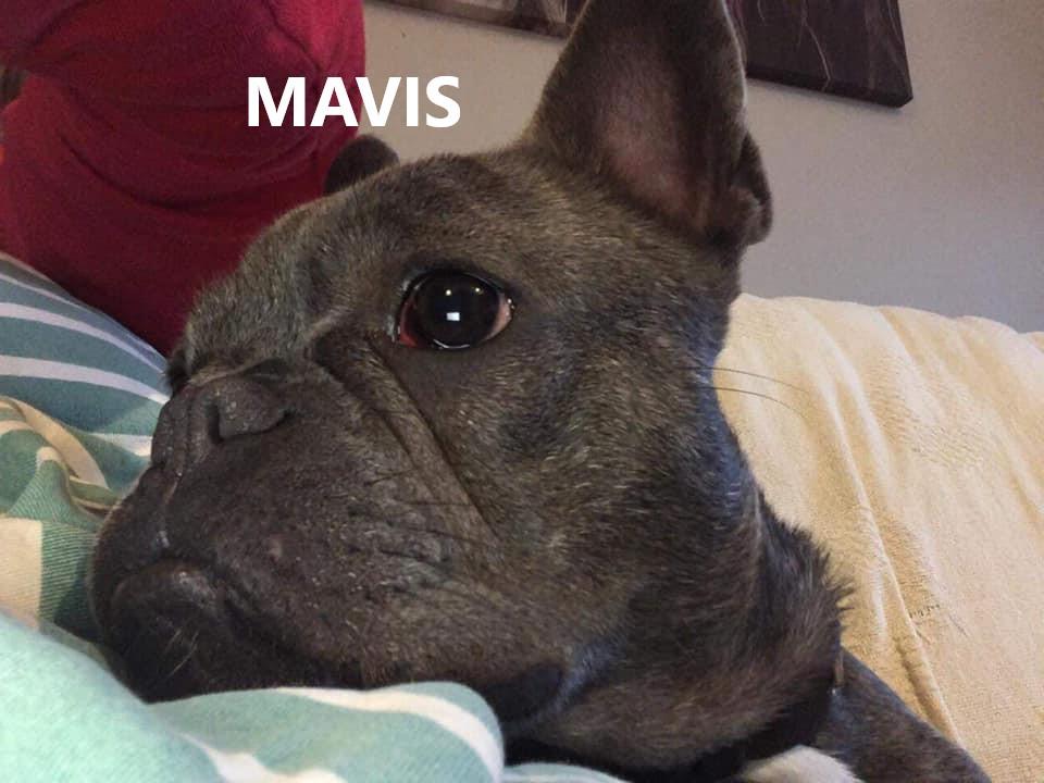 MAVIS.jpg