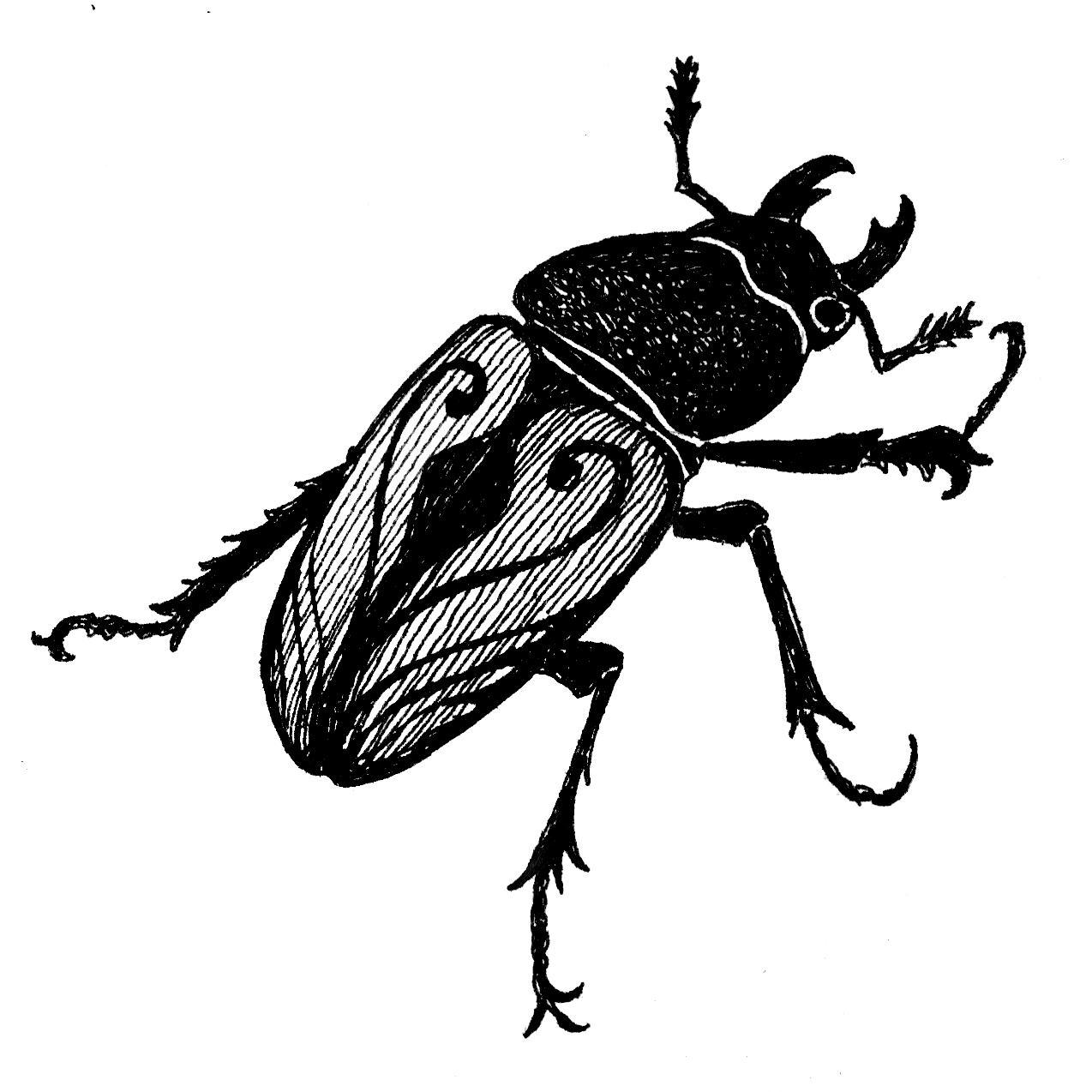 NYD firefly.jpg