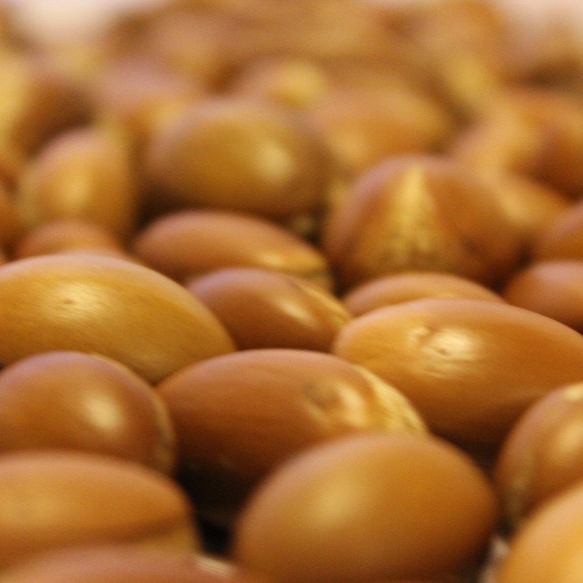 Argan oil<strong>Argan oil is rich in Vitamin E and essential fatty acids.</strong>