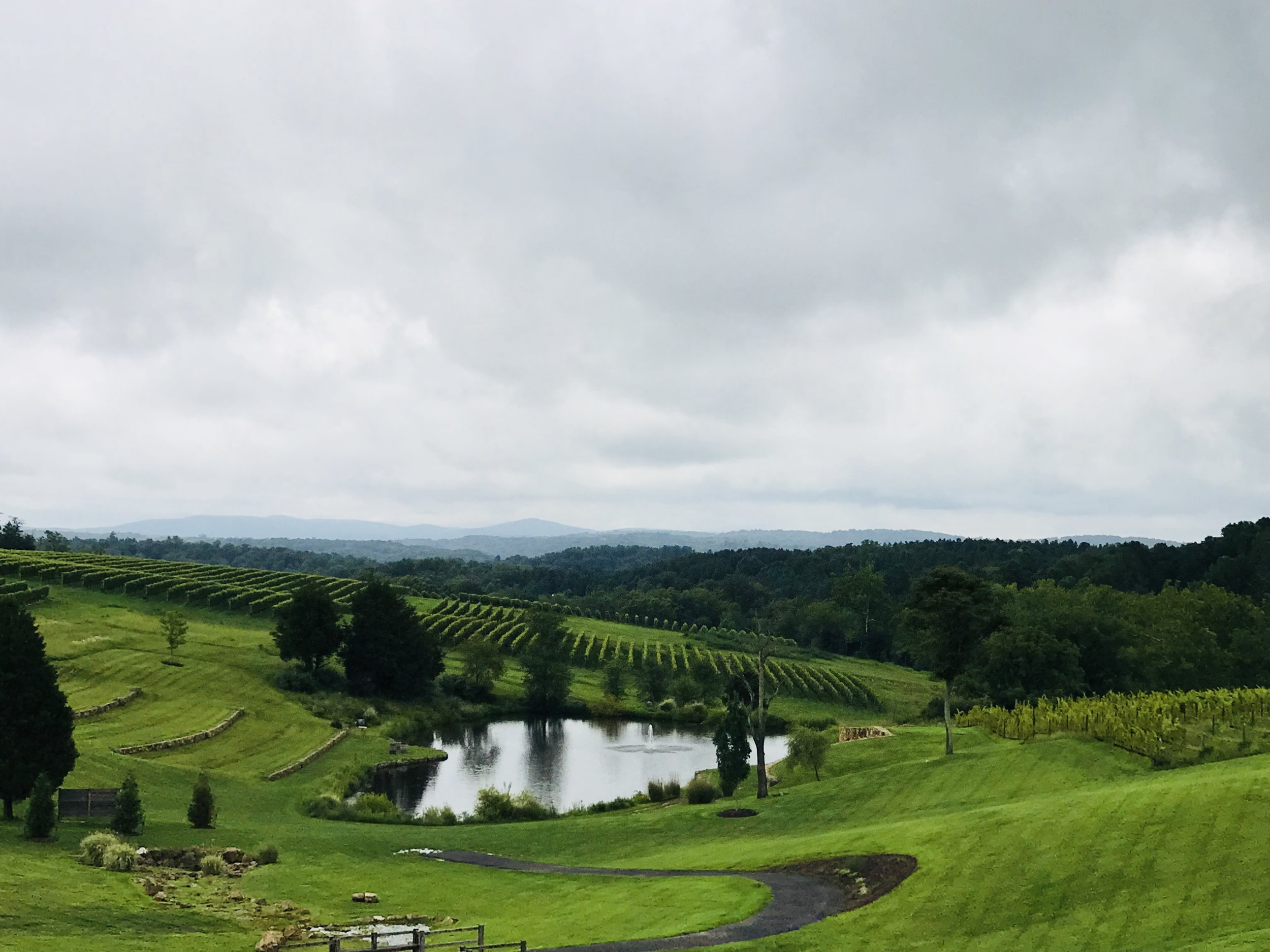 Unforgettable Winery Experiences in the beauty of Northern Virginia Wine Country -