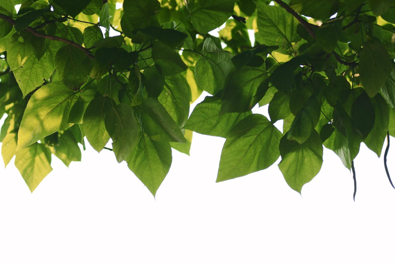 Website-Leaves.jpg