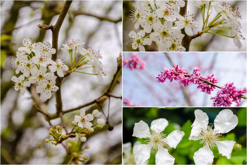 Springx4.jpg