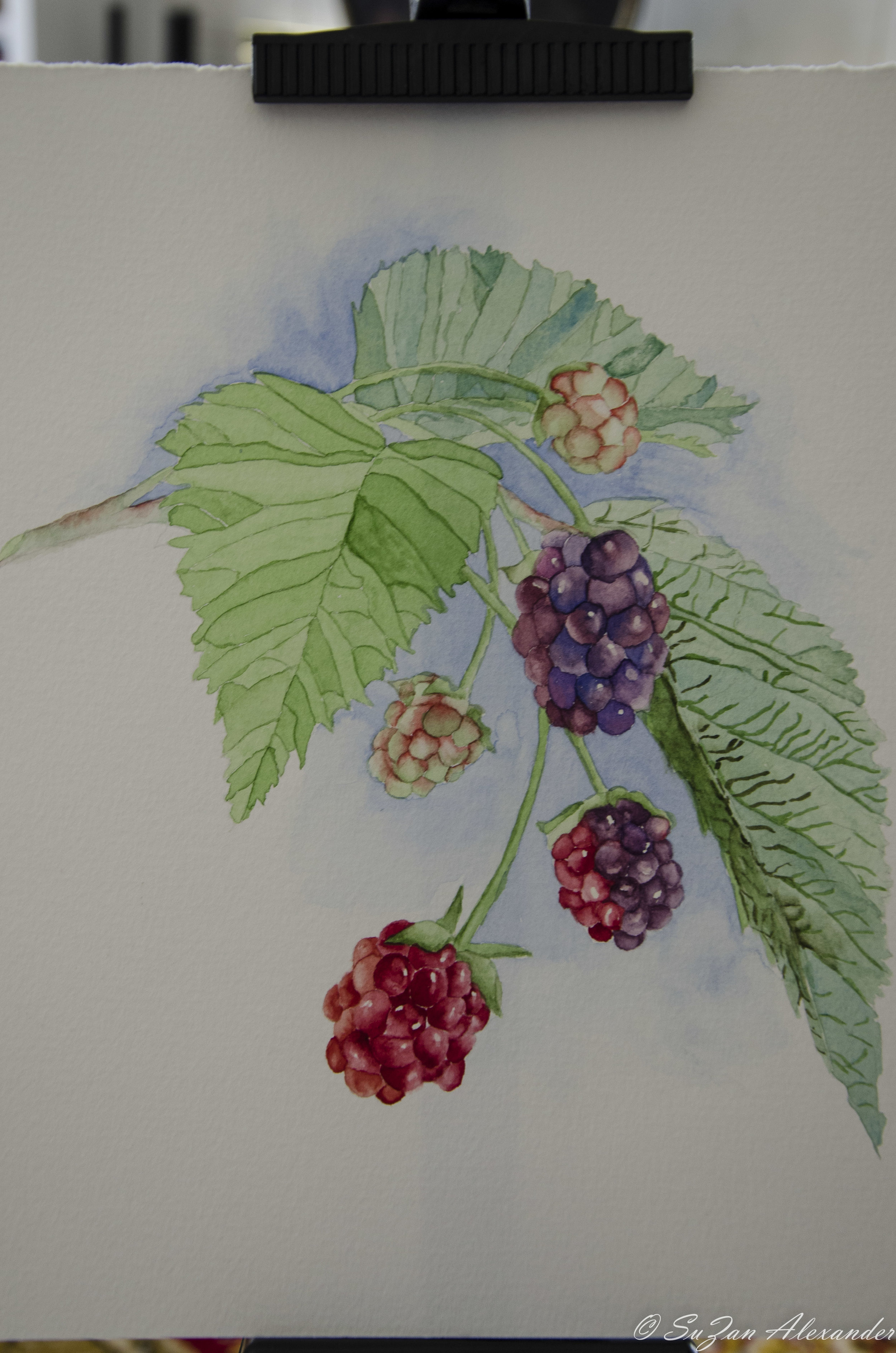 Watercolor Project 3: Cluster of Berries