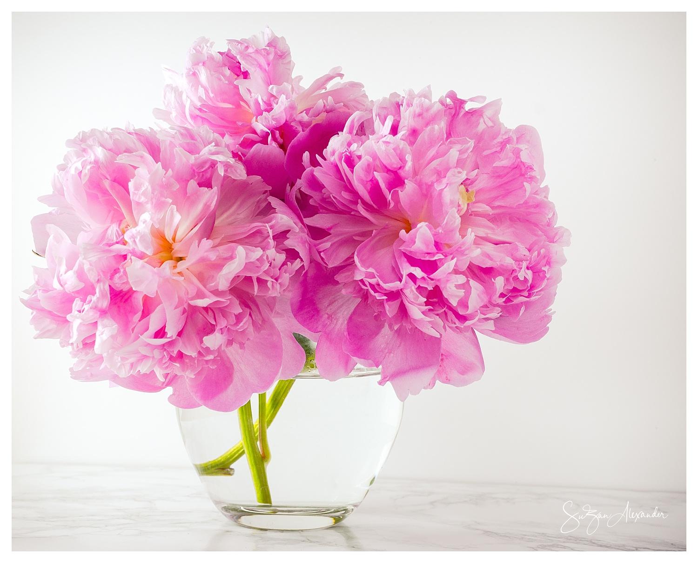 © 2018 SuZan Alexander,   Pretty Pink Peonies  ,Digital Photography.