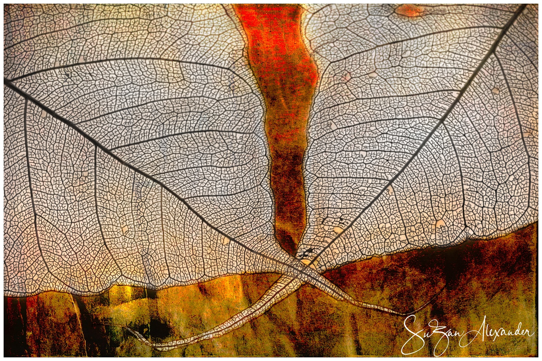 © 2013 SuZan Alexander.   Skeleton Leaves Composite on Warm Colors  . Digital Photography