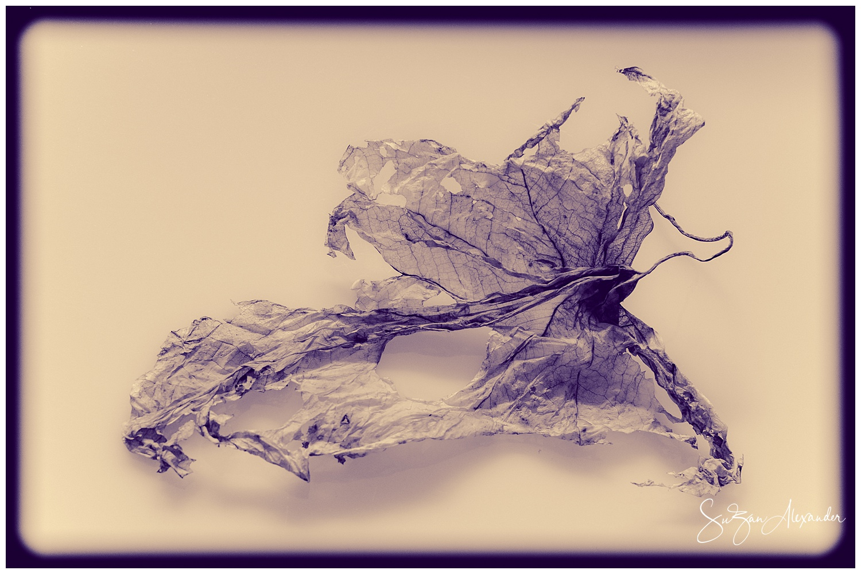 © 2018 SuZan Alexander.   Spent Caladium Leaf  . Digital Photography