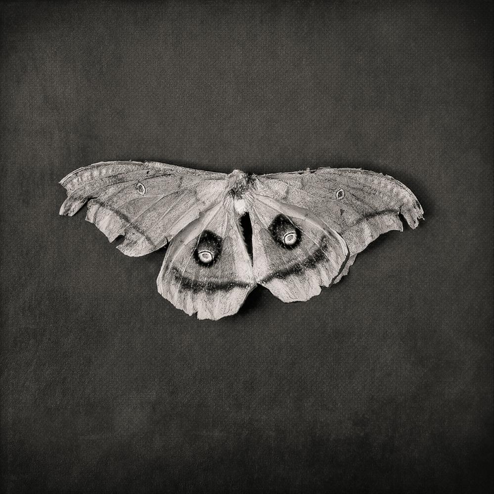 "© 2019 SuZan Alexander,   Moth  . Digital Photography. (6' x 6"")"