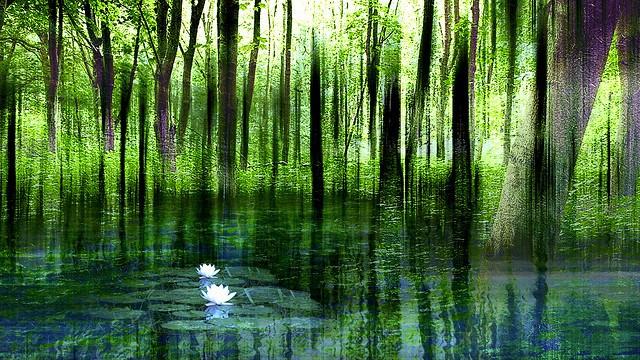mindfulness lily pad