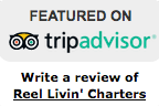 Trip Advisor 2.png