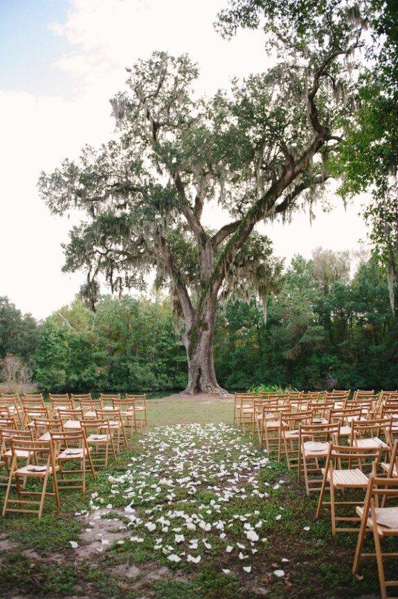 Ceremony Tree.jpg