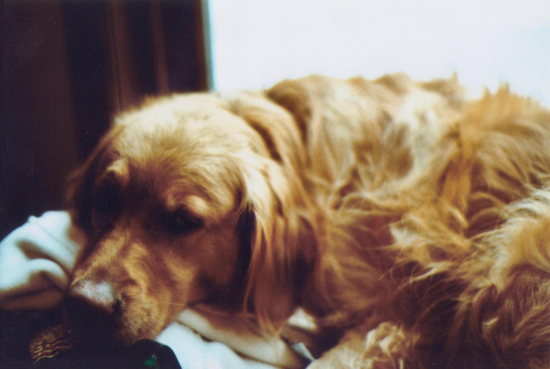 Lilly #3.jpg