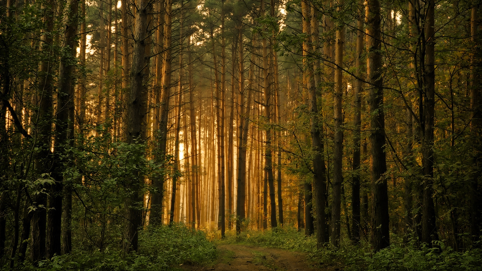 Forest-hd-images-1.jpg