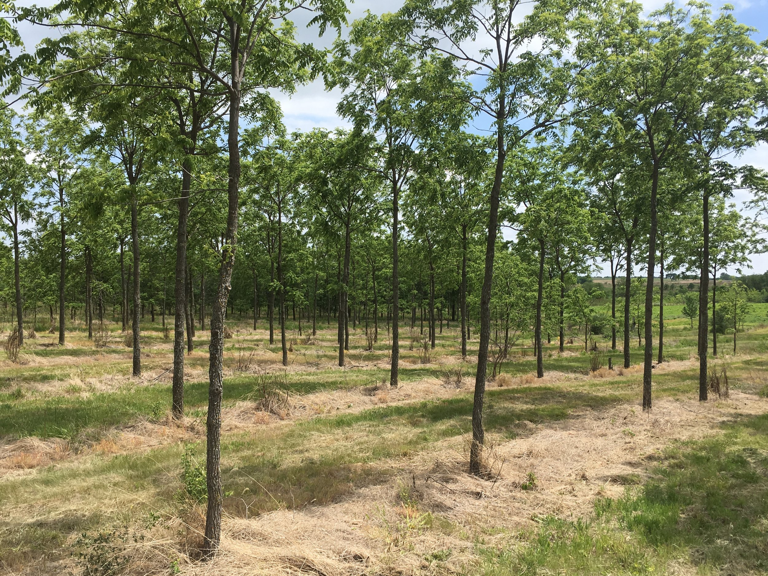 What is a Tree Farm? -
