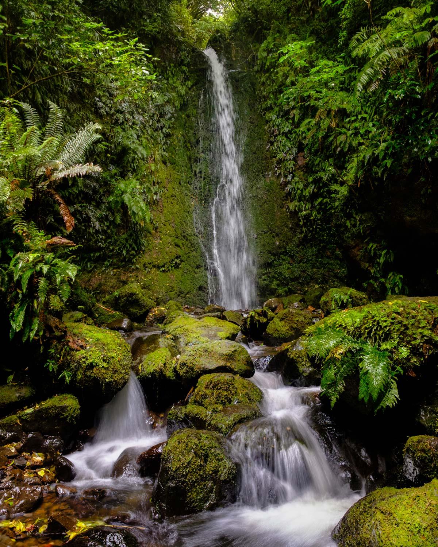 Nicols Falls