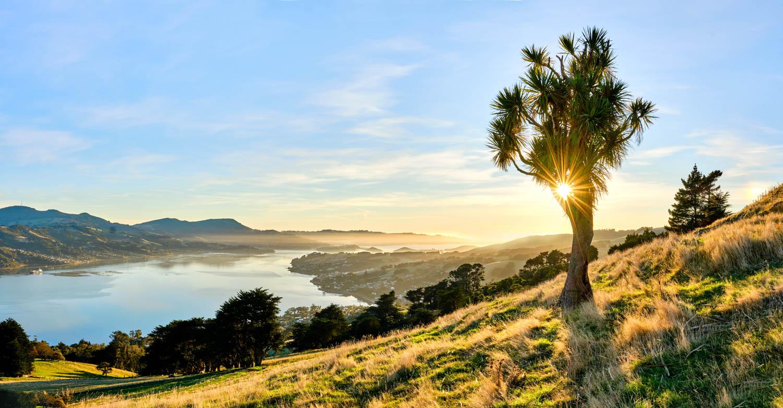Otago Peninsula, Claremont, Dunedin
